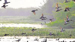 Birds and other myriad creatures bring joy during summer months