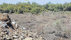 The City Industrial Development Corporation (Cidco), which holds a stake in the industrial zone, said illegal debris dumping was carried out by unidentified persons(HTFile)