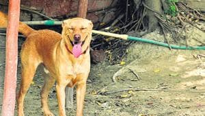 Man beats dog to death after it bites his wife in N Delhi