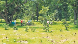 A city-based environmental organisation has carried out 3.9 million tree plantations over the past 10 years in its attempt to safeguard and restore wildlife habitats, and provide forest-based resources to local communities in India.