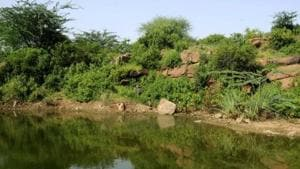 The forest departments of Faridabad and Gurugram will together establish nine new security outposts for the protection of the Aravalli forests by August, department officials have confirmed.