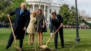 The sapling, a gift from Macron on the occasion of his state visit, is gone from the lawn.(AP Photo)