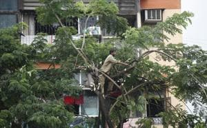 Having equal no of experts, councillors on tree authority not a must:BMC tells HC