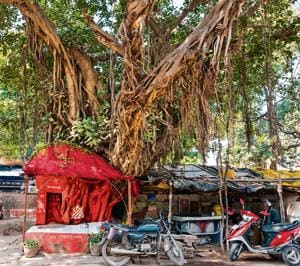 Review: Cities and Canopies: Trees in Indian Cities by Harini Nagendra and Seema Mundoli