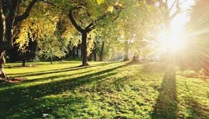 Excerpt:The public life of trees