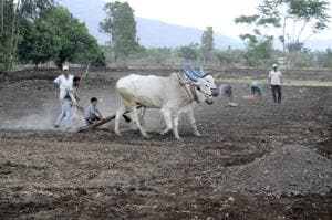 According to the recent data published by the Census of India, 71% Dalits are landless labourers who work on land they do not own.(Ravindra Joshi/HT PHOTO)