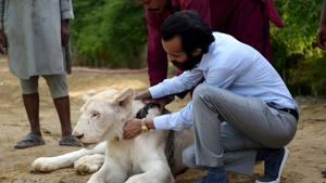 Bilal Mansoor Khawaja, a private zoo owner, sits with his white lion in Karachi.(AFP)