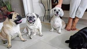 The four dogs were shifted to a neighbour's house on Monday.(Sourced)