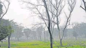 Aiming to increase green cover, the Ghaziabad development authority (GDA) has come up with the concept of developing 'tiny forests' in the city.