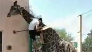 The incident took place at the Shymkent Zoo in Kazakhstan.(Instagram/turkestan_today)