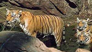 The state government had issued an order on August 3 reconstituting the 30-member board mandated to clear projects in animal zones for three years.(HT image)