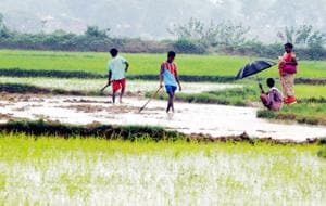 2 million farmers in MP asked to clear farm loans to get new loan