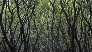 Chhattisgarh has become the second state in the country after Odisha to give recognition to forest lands acquired by scheduled tribes and other traditional forest dwellers, according to a government statement(Satyabrata Tripathy/HT Photo)