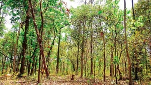 The Wildlife Conservation Strategy of 2002 recommends a buffer of 10 km around sanctuaries. The SC had upheld the policy and directed states and the Centre on several occasions to enforce the ESZ.(HT image)