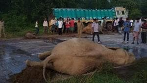The elephants were crossing the highway when they were hit by a bus and two trucks.(HT PHOTO)