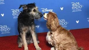 Lady and the Tramp attend D23 Disney + event at Anaheim Convention Centre.(AFP)