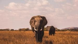 Yes, you should take your kids on safari—and not just for their sake.(Unsplash)