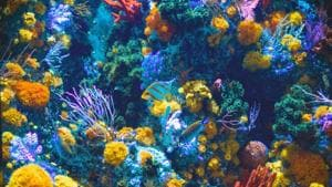 Coral reefs in Jamaica shows how nature contains healing powers.(Unsplash)