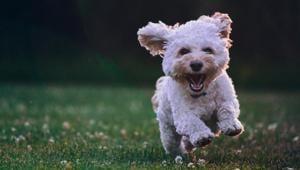 Want better heart health? Get a dog