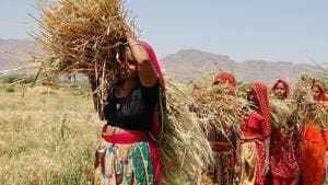 Women farmers focus of Rajasthan govt's new subsidy scheme