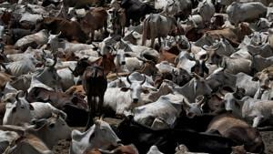 No one to pick Delhi's carcasses as price of rawhide tanks after closure of tanneries in UP