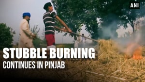 Stubble burning continues in Punjab despite government ban