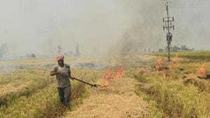 I've met several women who've been plucking out stubble from the fields. One of them told me that they were too few in number to replace burning with plucking in such a short window of time(Sameer Sehgal/ Hindustan Times)