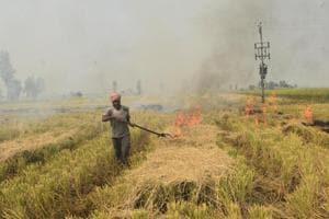 A farmer sets stubble on fire in a field at Burj village in Chabal, Tarn Taran district of Punjab.(HT PHOTO.)