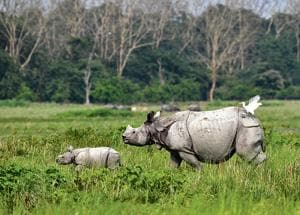 Review: Rewilding - India's Experiments in Saving Nature by Bahar Dutt