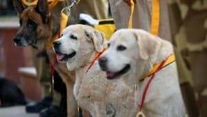Coming soon: India's first war memorial for animals