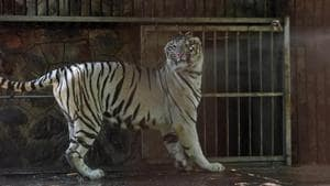 The zoo officials are now trying to making alternative arrangements for ensuring daily supply for the animals.(Sanchit Khanna/HT file photo)