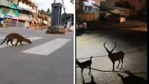 The collage shows wild animals roaming around.(Twitter/@susantananda3)