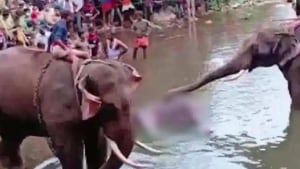 The elephant rushed to nearby Velliyar river after eating the fruit and died there even as forest officials rushed to rescue it. The crackers exploded when the elephant chomped on the pineapple.(ANI Photo)