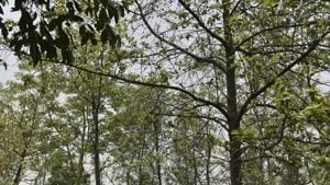 Around 12 acres of land will be required to develop the parks, Ludhiana MC officials said after consultations with forest department officials.(HT PHOTO/For representation only)