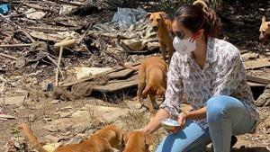 Actor Sonnalli Seygall have been feeding strays in her locality.(Instagram/sonnalliseygall)