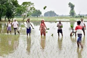 Farm workers sowing paddy in a field near Mudhal village in Amritsar, Punjab. Demand for water peaks during this season in the state.(HT Photo)