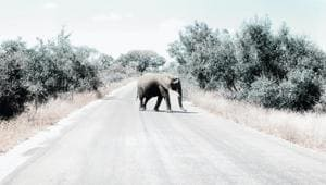 Covid-19 travel restrictions have adverse effect on Africa's tourism