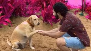 Varun Dhawan's video with his pet was showered with a lot of love by his fans.