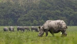 The Wildlife Protection Act was last amended in 2003.(AP)