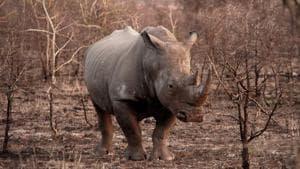 The image shows a rhinoceros. (representational image)(ANI)
