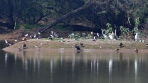 Resident birds enjoying the artificial isle at Sukhna lake.(Keshav Singh/HT Photo)