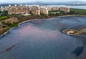 On January 3, the Thane district administration had submitted its final report to the state government, which showed only three wetlands, excluding the ones in Navi Mumbai.(Pratik Chorge/HT Photo)