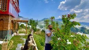 Sanjay Austa cherry picking at his farm stay, Meena Bagh Resorts, in Ratnari, while Beswa, the farm dog, a favourite with his Instagram followers, looks on. Austa began posting photos of his farm and his produce in 2015 and his account has nearly 2000 followers. (Photo courtesy Sanjay Austa )