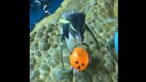 The image shows Bosco with his pumpkin shaped tiny bucket.(Twitter@shedd_aquarium)