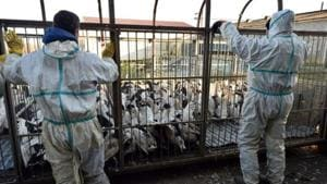 UK detects bird flu in turkey farm, to cull 10,500 birds