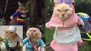 From hijabs to cosplay, Indonesian finds calling in cat fashion makeovers(Instagram/usingcloath_petswear)