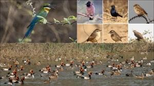 Here are a few places to see migratory birds this winter in Delhi NCR(Twitter/NDNS_HQ/Shivani_Saini/GoGroupOuting)