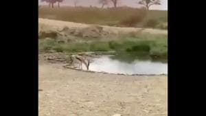 The image shows a gazelle drinking water in the wild.(Twitter/@anandmahindra)