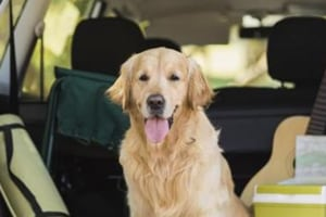 Now pet owners can avail ambulance for animals in Chandigarh