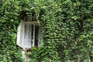 Can't breathe even when indoors? Plant ivy for air purification at...